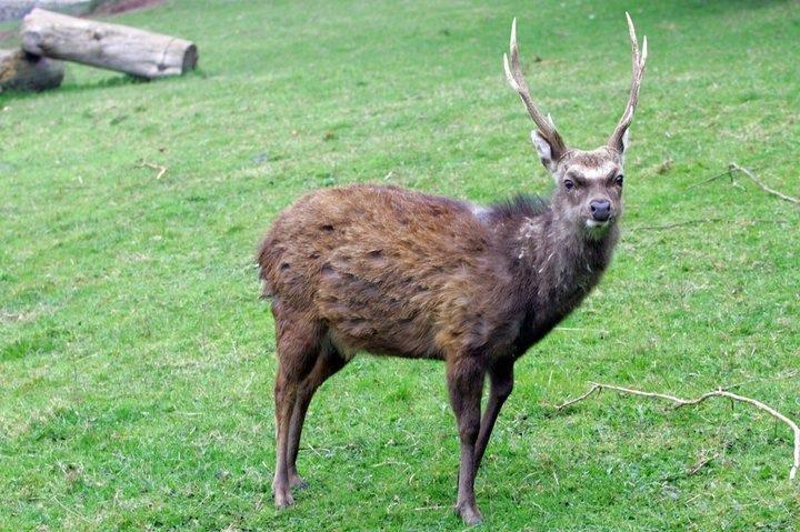 deer wicklow