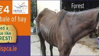 ISPCA horses