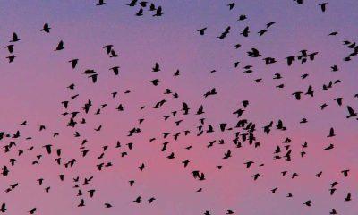 Bird race