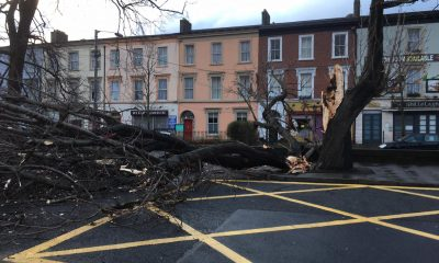 Bray tree down