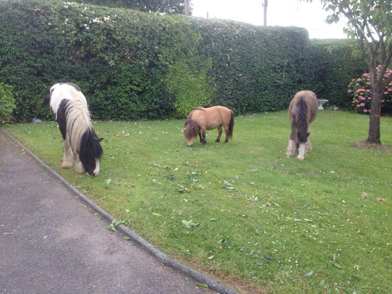 Horses found June 22 in Arklow