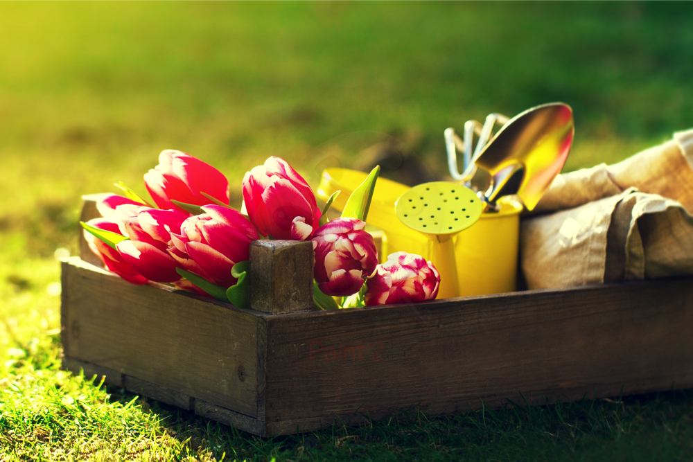 Horticulture : Gardening