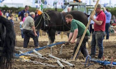 Wicklow ploughing 1
